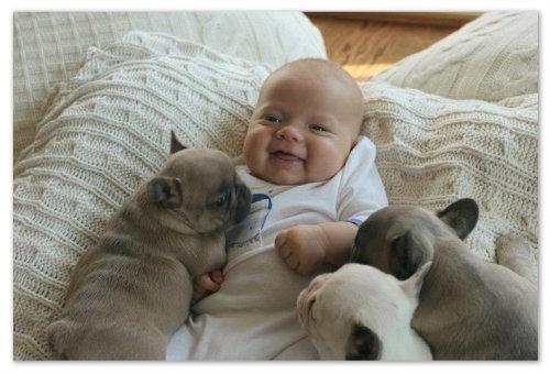 Малыш в окружении щенков
