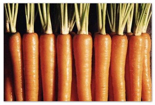 Морковка для детей