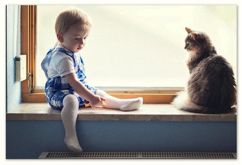 Кошка на подоконнике.