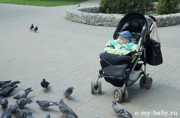И птичек из неё кормить тоже удобно.