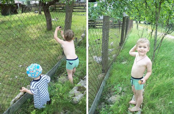 Рассматриваем домашних птиц на ферме за забором.