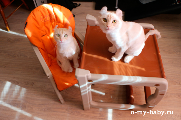 Кошки облюбовали сидение.