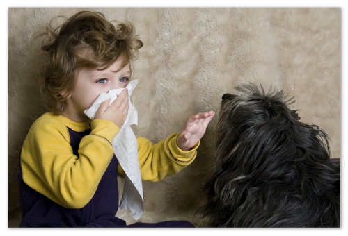Аллергия на животных.